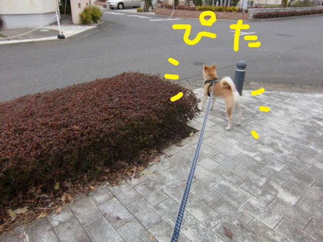 f:id:maki-mama:20100310154136j:image:w300