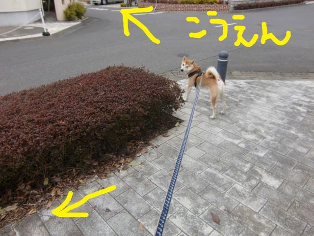 f:id:maki-mama:20100310154137j:image:w300