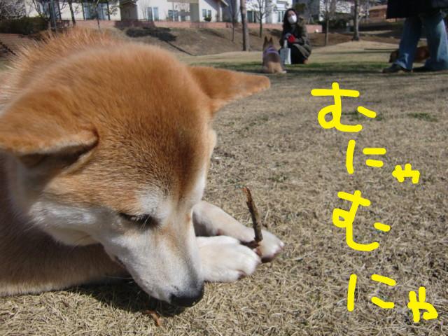 f:id:maki-mama:20100312105242j:image:w300