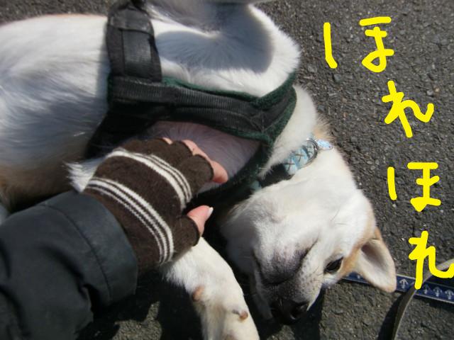f:id:maki-mama:20100312105244j:image:w300