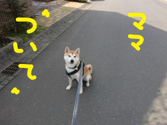 f:id:maki-mama:20100313122914j:image:w300