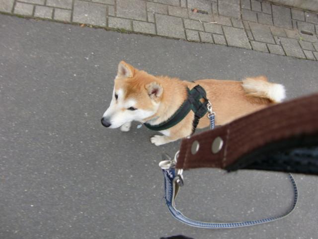 f:id:maki-mama:20100316125019j:image:w300