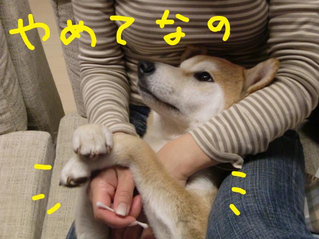 f:id:maki-mama:20100316125020j:image:w300