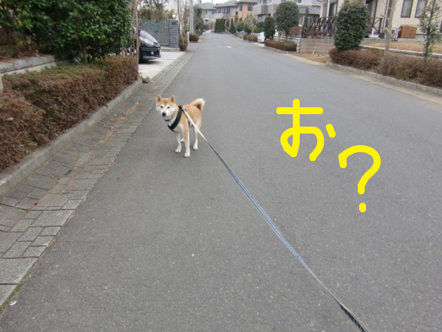 f:id:maki-mama:20100316125024j:image:w300