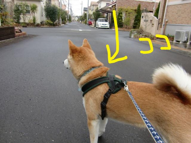 f:id:maki-mama:20100326155250j:image:w300