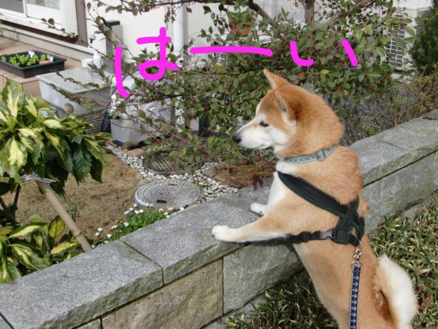 f:id:maki-mama:20100326155254j:image:w300