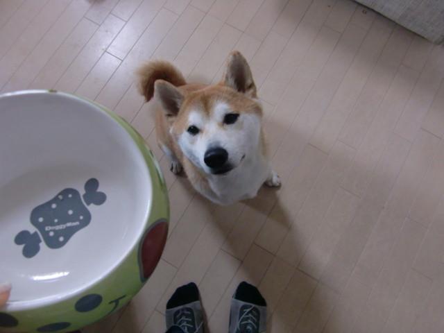 f:id:maki-mama:20100328224353j:image:w300