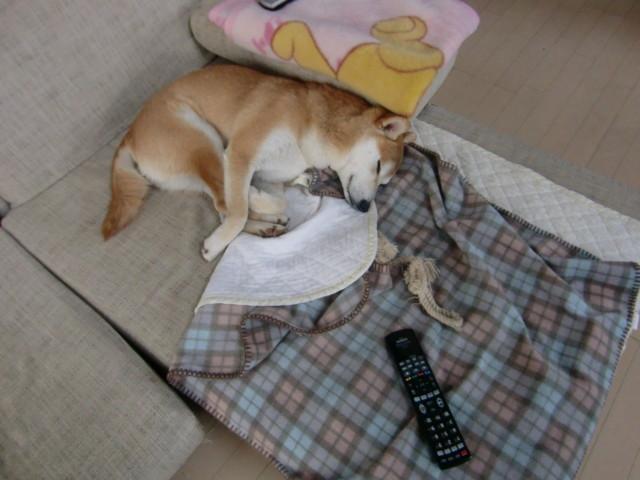 f:id:maki-mama:20100331214251j:image:w300