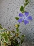 f:id:maki-no:20090406171734j:image
