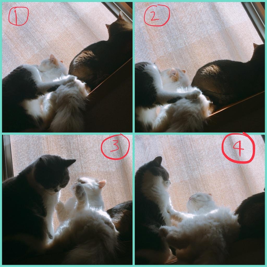 f:id:maki37imu:20180621154259j:image