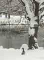 道庁の池辺にて