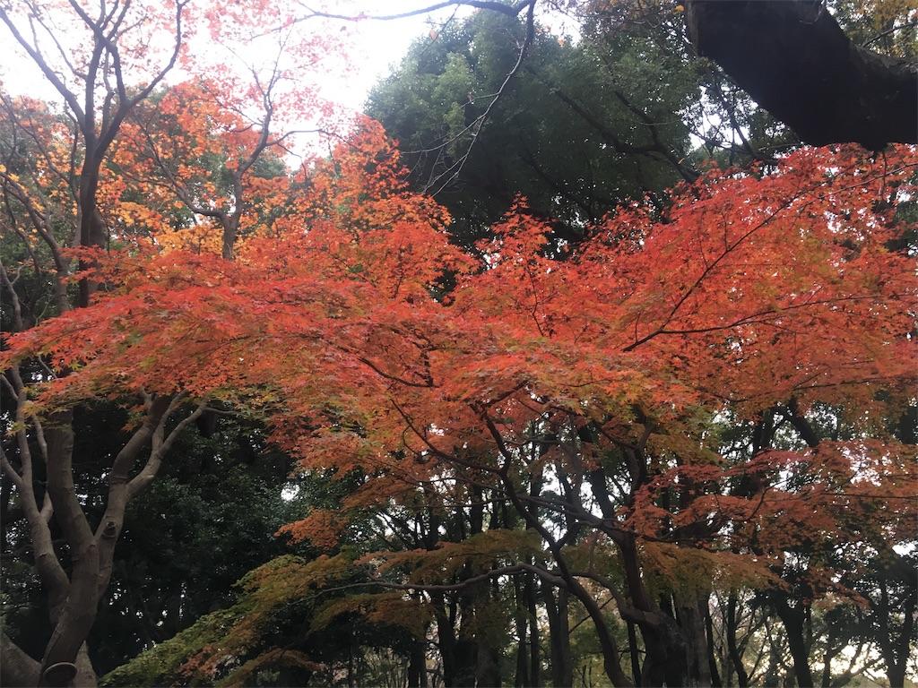 f:id:makikosuwa:20171028185038j:image