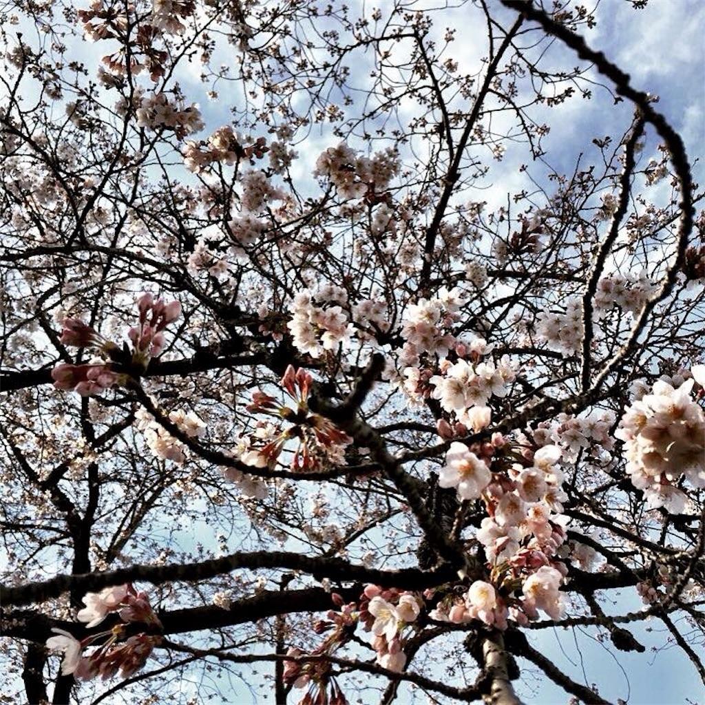 f:id:makikosuwa:20171028190237j:image