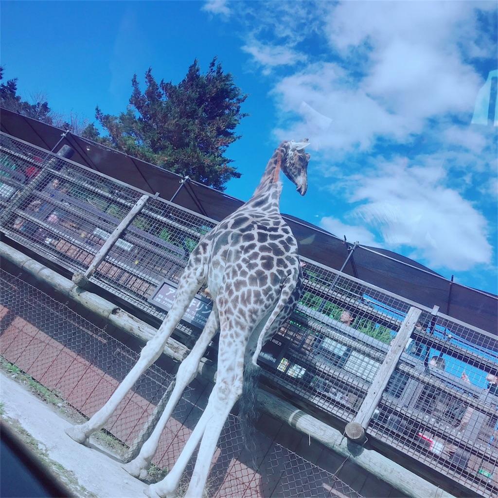f:id:makikosuwa:20181111190350j:image