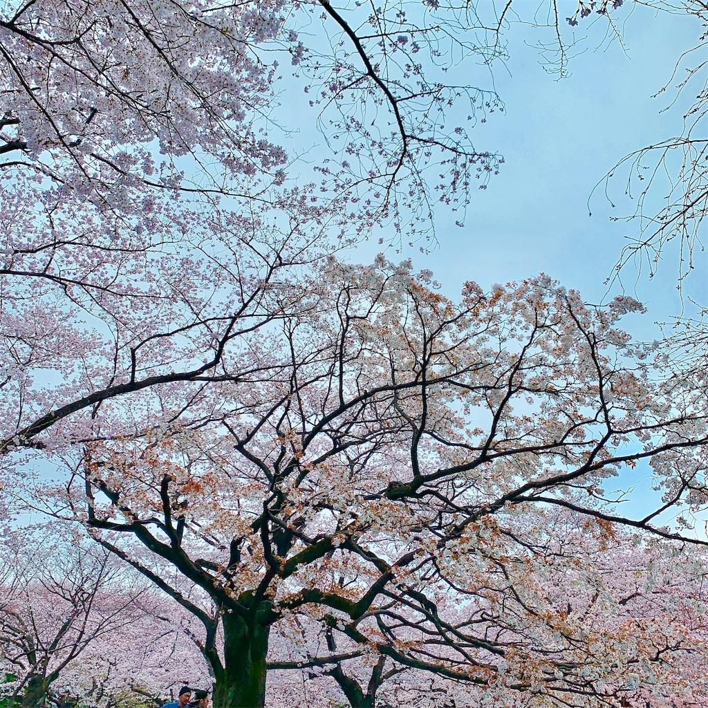f:id:makikosuwa:20190330203842j:image