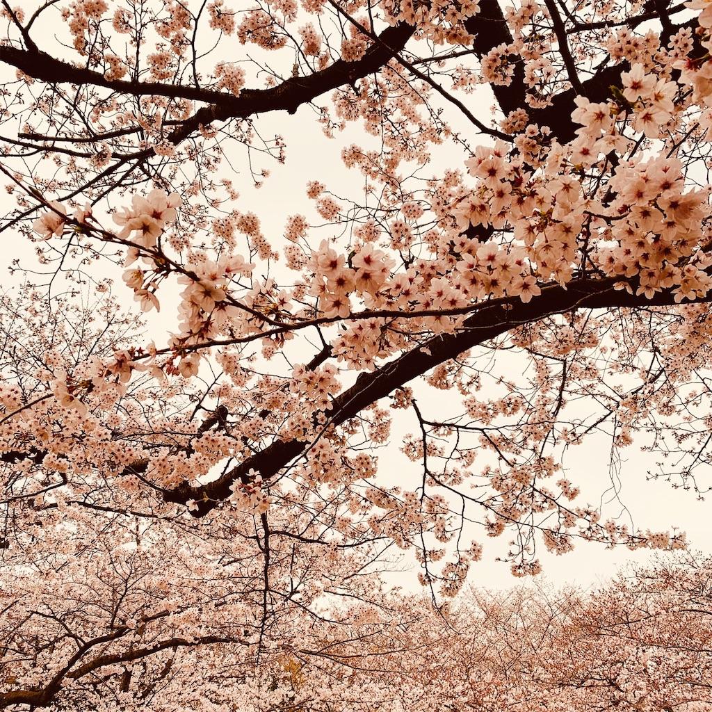f:id:makikosuwa:20190330203852j:image