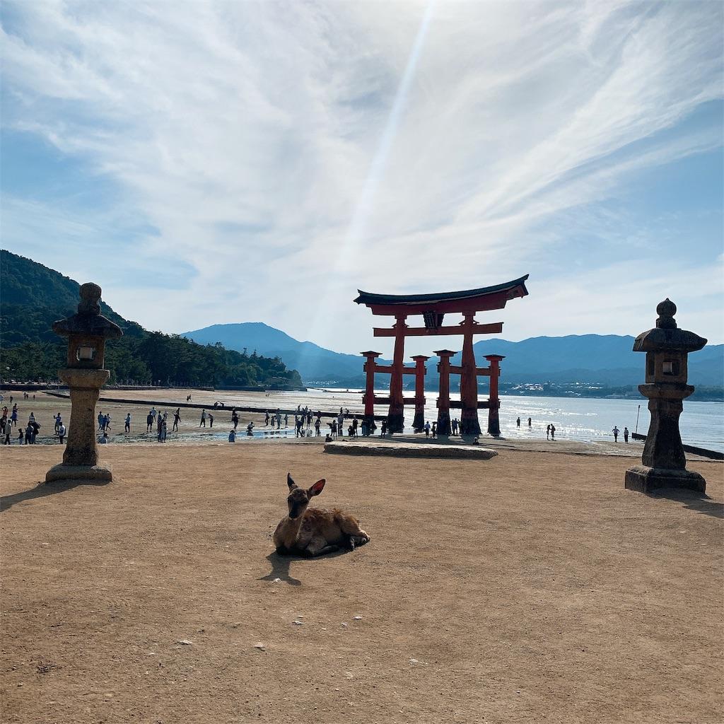 f:id:makikosuwa:20190601201815j:image