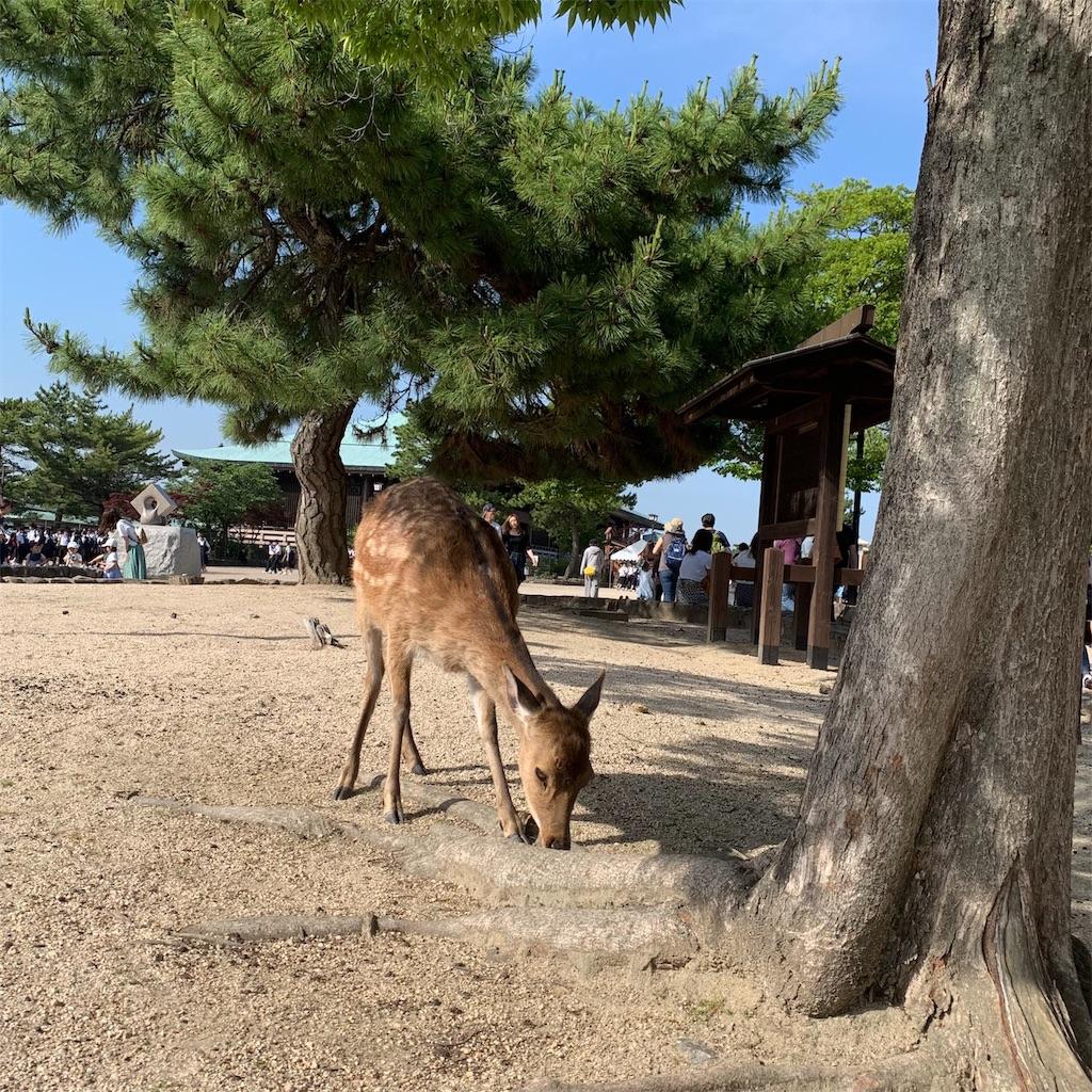 f:id:makikosuwa:20190601203800j:image