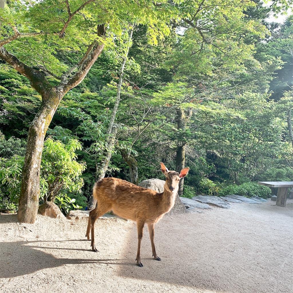 f:id:makikosuwa:20190601210517j:image