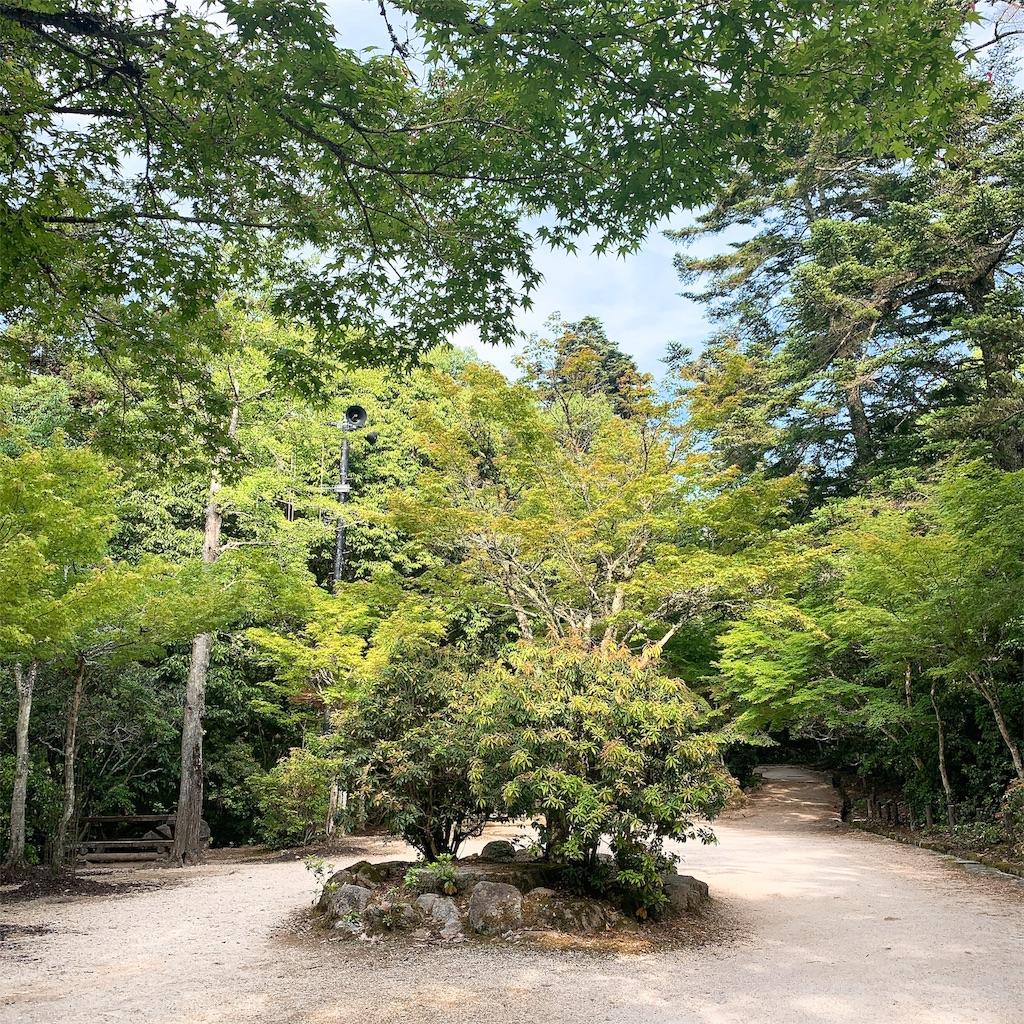 f:id:makikosuwa:20190601210549j:image