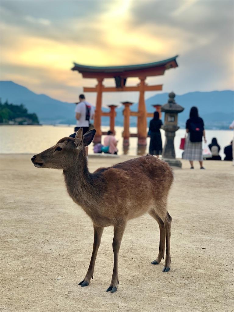 f:id:makikosuwa:20190601211740j:image
