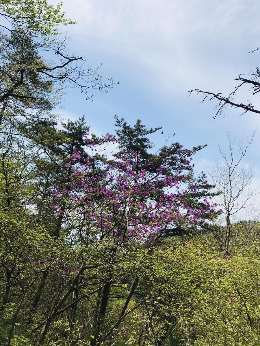 六甲山の花