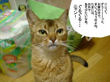 f:id:makiyagaku:20200103221358j:plain