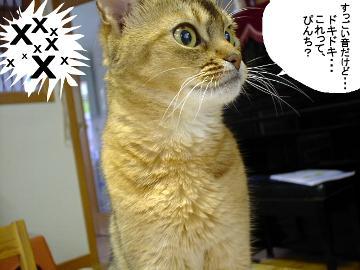 f:id:makiyagaku:20200103221534j:plain
