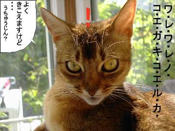 f:id:makiyagaku:20200103223004j:plain