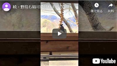 f:id:makiyagaku:20200208180603j:plain