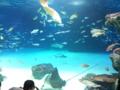 サンシャイン水族館行ってきたよ