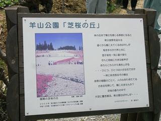 羊山公園芝桜2(看板)