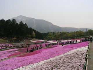 羊山公園芝桜12(武甲山バック・8の位置違い)