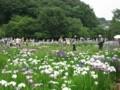 北山公園菖蒲まつり24