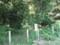 この辺から雑木林になります。