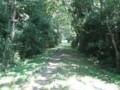 [安比奈線]雑木林の中から安比奈線の線路を撮影。