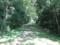 雑木林の中から安比奈線の線路を撮影。