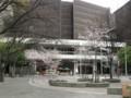 新町北公園のサクラ 大阪厚生年金会館側を向いて