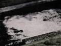 乞田川に落ちたサクラの花びら