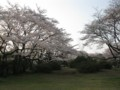 狭山公園脇 湖畔交番付近