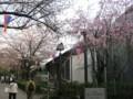 飛鳥山公園 サクラ