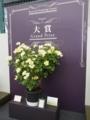 バラの鉢植え部門展示