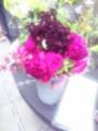 バラの鉢植えコーナー