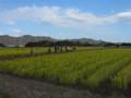 菜な畑ロード(右側)