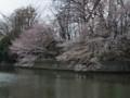 武蔵関公園 サクラ