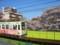 都電7000形(7029号車)と神田川のサクラ