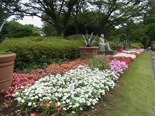神代植物公園 パンジー