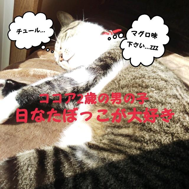 f:id:mako-s-kurowassan0411:20190316232150j:plain