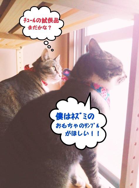 f:id:mako-s-kurowassan0411:20190429145847j:plain