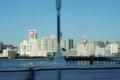 清洲橋から見た東京スカイツリー